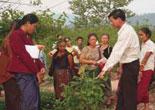 Thateng Organic Farm